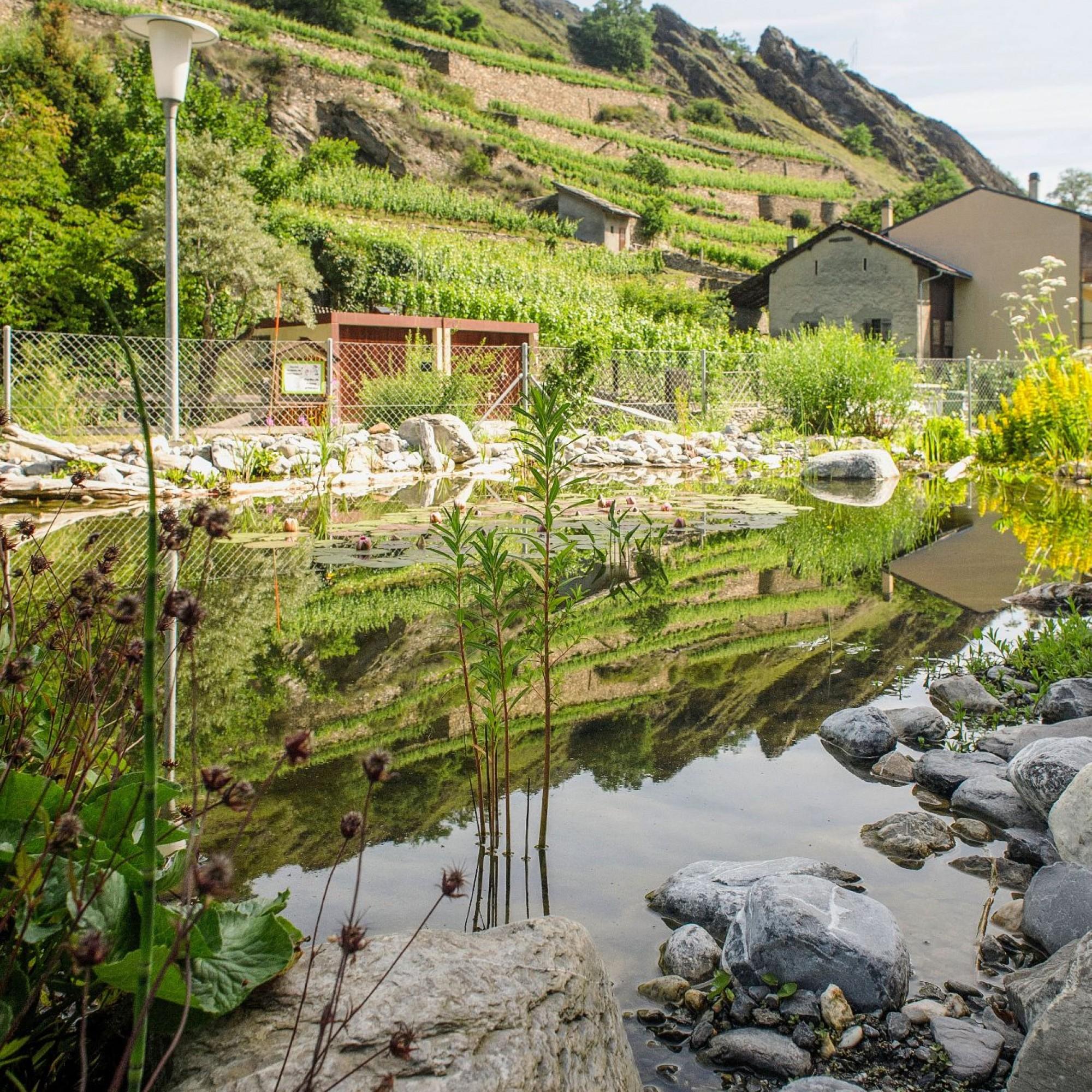 Le milieu urbain empêche l'air frais d'entrer et les sols imperméables n'absorbent pas l'eau lors des fortes pluies. En Valais, on mise désormais sur la végétalisation, la gestion de l'eau, la porosité des sols, mais aussi sur l'information, pour une pris