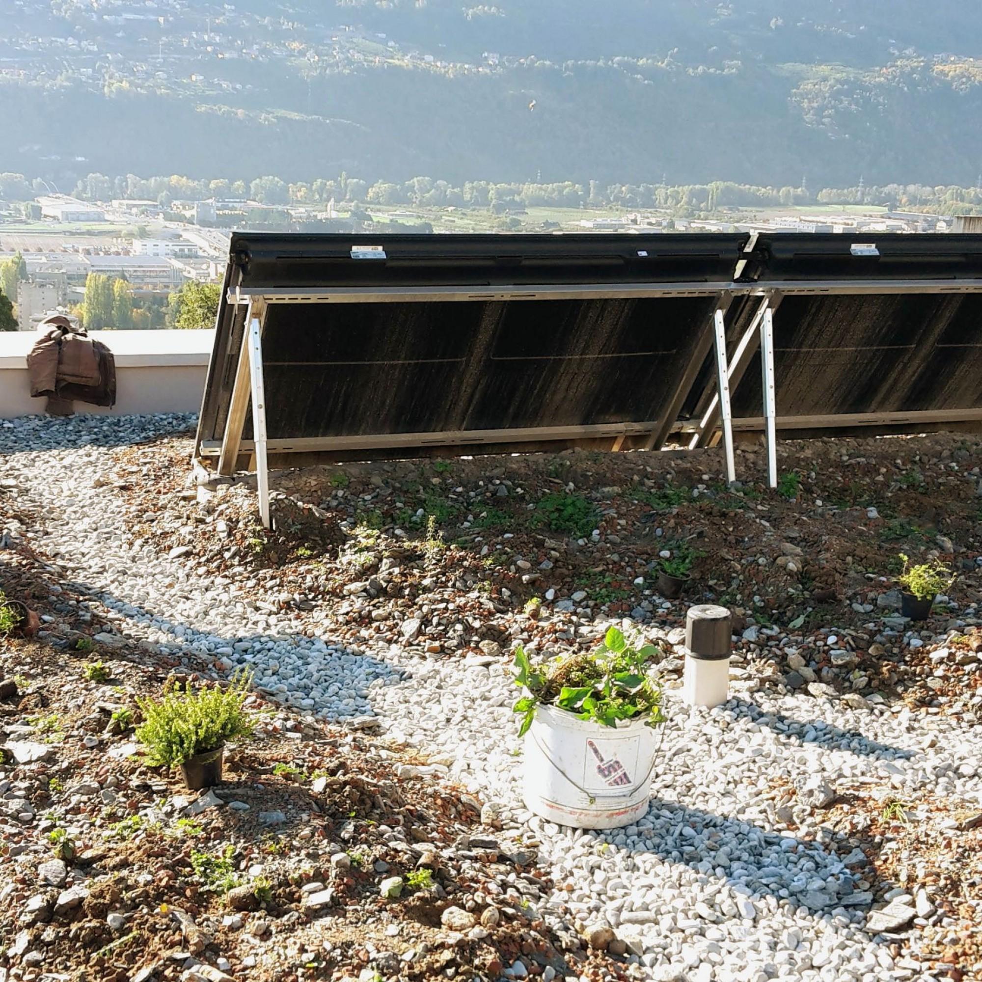 Pendant une journée ensoleillée, un toit foncé atteint 80 degrés contre 29 degrés sur une toiture végétalisée.