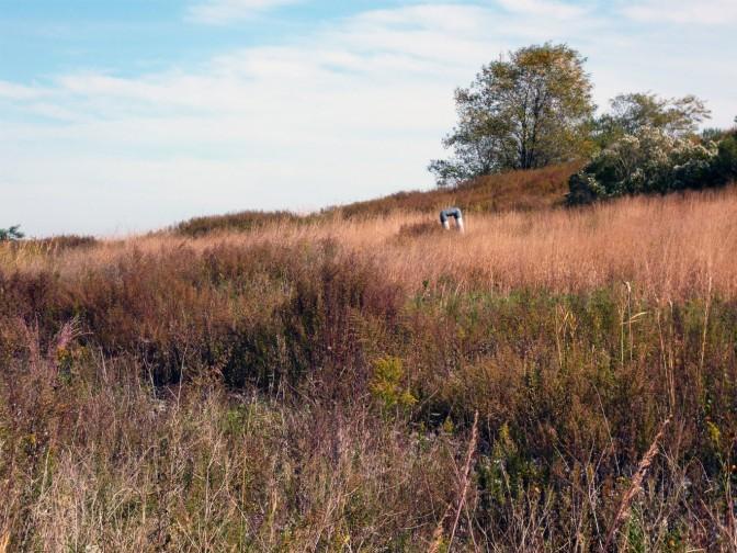 De nombreux projets de développement sont en cours au parc Freshkills de New York