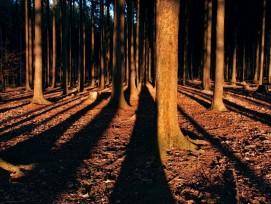 Prix Lignum 2021:le bois vaut de l'or