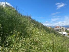 Micro forêts urbaines Genève
